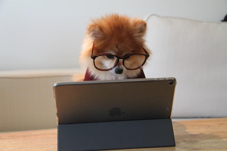 Deljenje člankov lahko sproži informirane debate. © Cookie the Pom/Unsplash